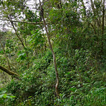 01 Viajfilos en Panama. Sendero Quetzal 29