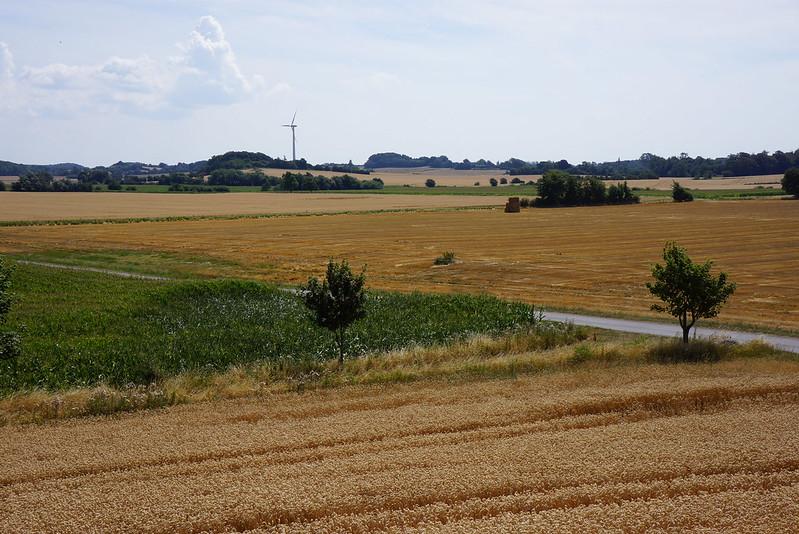 Kaedeby-Haver-2014-07-24 (22)