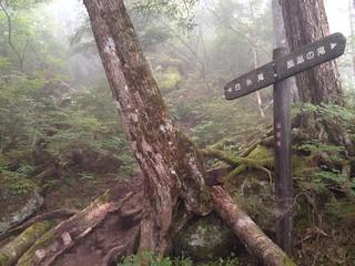 鳳凰山 ドンドコ沢 登山道 | by ichitakabridge