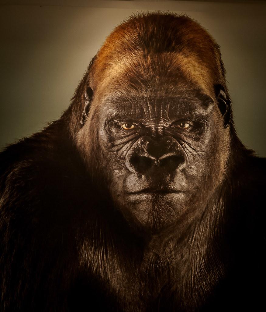 Dog scared to death | Bushman Prank - YouTube  |Bushman Gorilla Death
