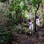 01 Viajfilos en Panama. Sendero Quetzal 56