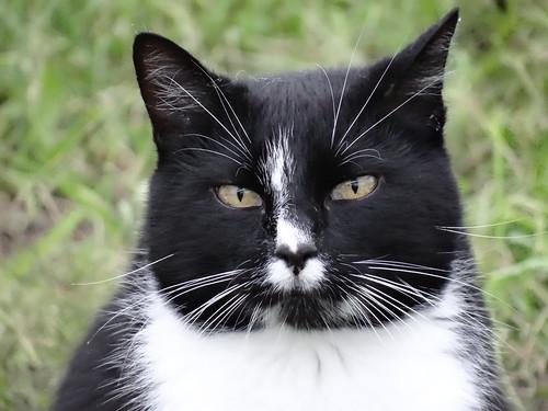 Gesicht der Katze und Kopf der Katze, weich ist die Luft an deinem stillen Fluß, und Heil und Lindrung suchen hier die Katze, wohl macht der schiefe Turm mit dem Gedanken vertraut, daß Irdisches zur Erde muß 2564