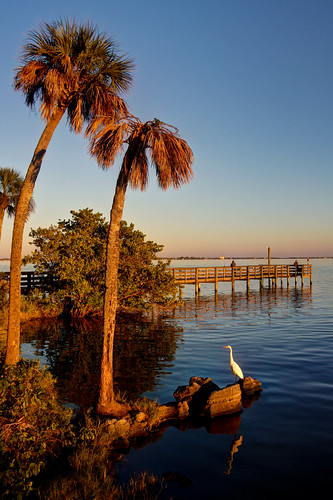 park usa bird animal outdoors florida aves northamerica animalia greategret palmbay sabalpalmetto brevardcounty neoaves castawaypointpark