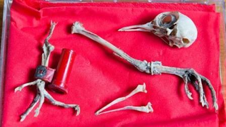Restos de la paloma encontrada en Surrey