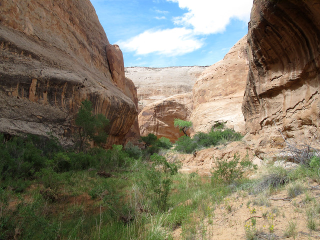 White Roost Canyon