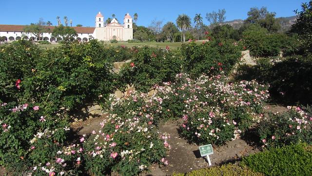 IMG_8638 Santa Barbara Mission Postel Rose Garden