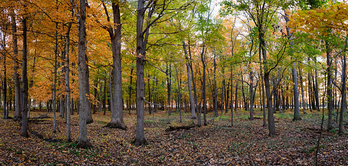 trees sunset panorama orange brown ontario canada color colour tree green fall nature colors yellow rural forest 35mm dark outdoors prime evening countryside nikon colours floor ottawa ground bark 35mmf18 primelens d7100 bensenior nikond7100