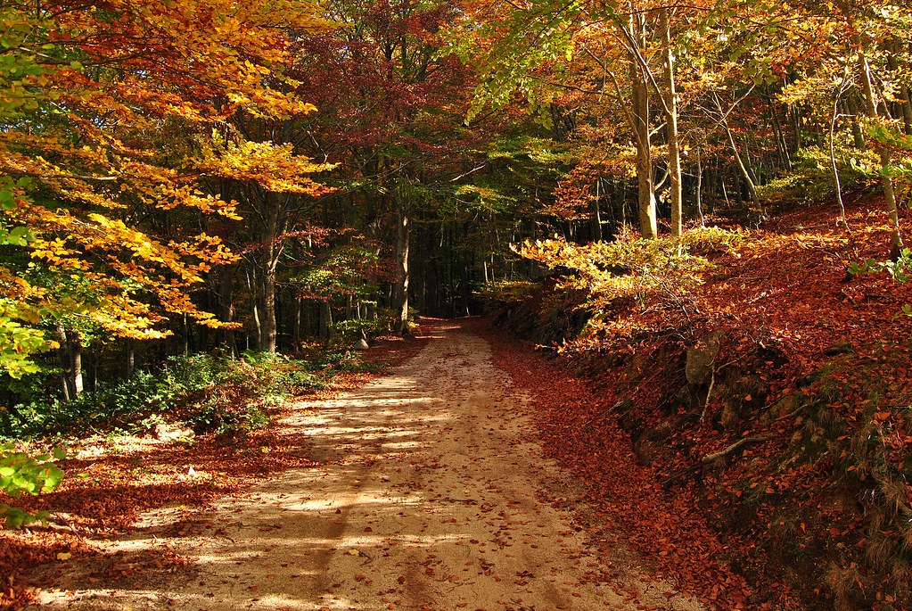 Caminos de otoño - Autumn paths