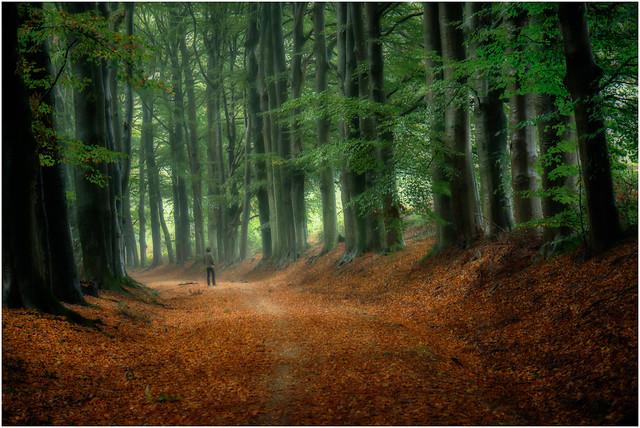 Walking in Wonder - 'Thinker'