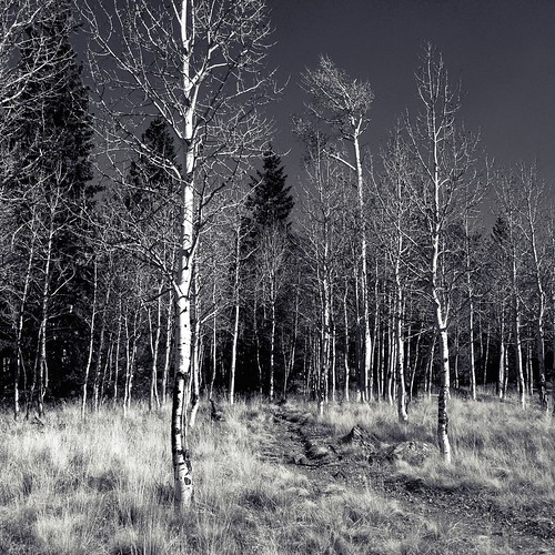 autumn trees arizona fall forest az national flagstaff snowbowl coconino iphone 2014 cameranoir