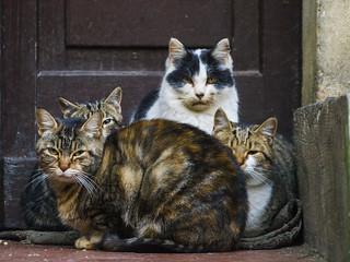 E mo' so cats! | by Riccardo Palazzani - Italy