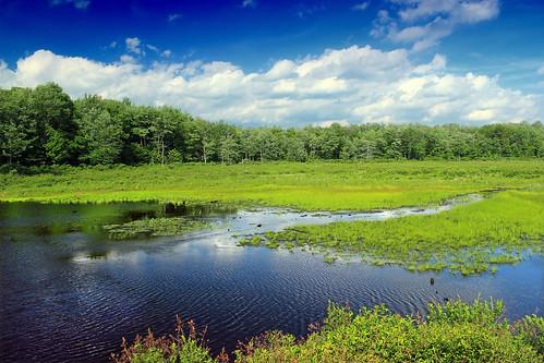 Wetland (1)   by Nicholas_T