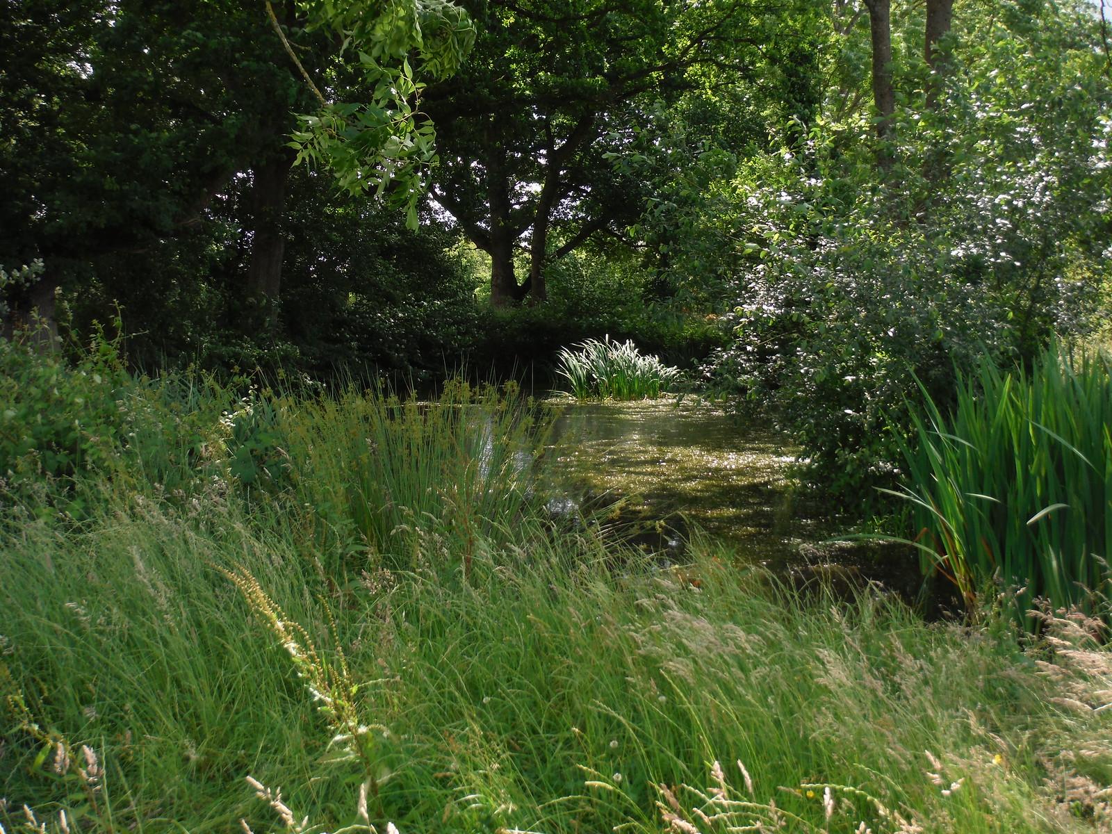 Pond in Meadow, near Frenchmoor SWC Walk 265 - Dean to Mottisfont & Dunbridge