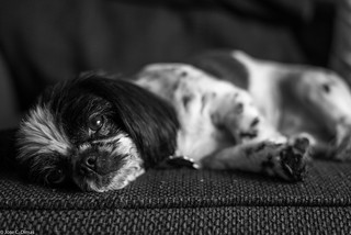 Such a hard life | by josecdimas