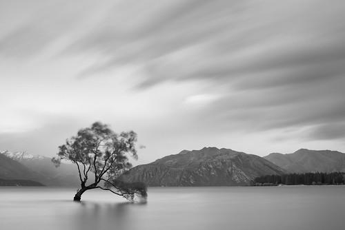 travel newzealand tree landscape blackwhite slowshutter genre lakewanaka bigstopper