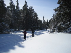 Cypress Hills PP - Cross-Country Skiing