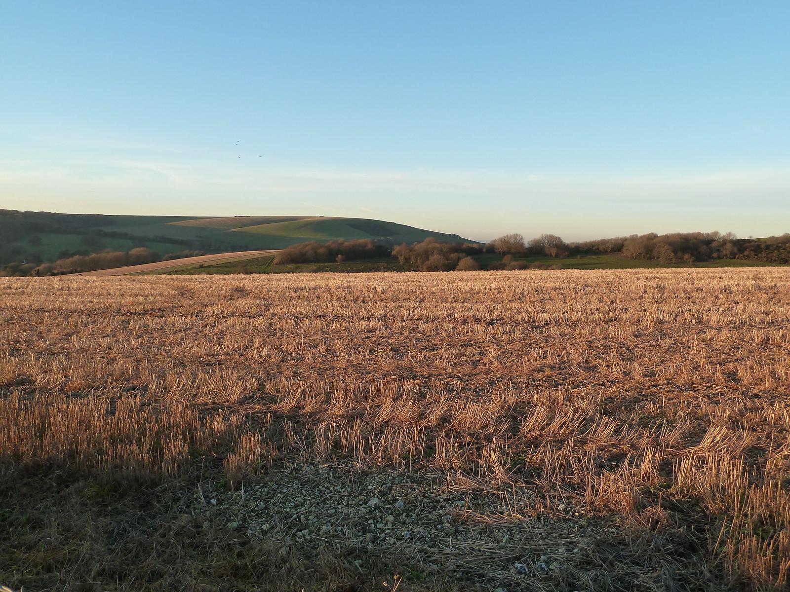 Wheatfield in Winter (Berwick to Birling Gap) In winter afternoon sun.