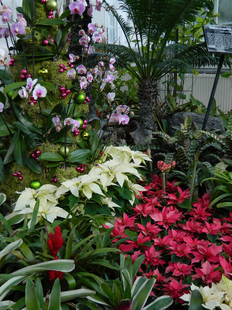 Orchid Christmas Tree.Orchid Christmas Tree Allan Gardens Conservatory Christmas