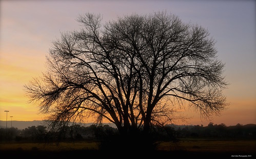 tree silhouette sunrise