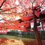 日。東福寺