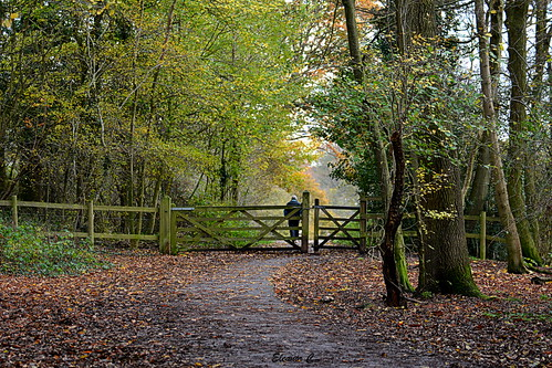 uk autumn scenery stanmore bentleypriorynaturereserve nikond7100 november2014 heriotwood