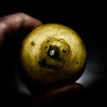 Lemon / 檸檬