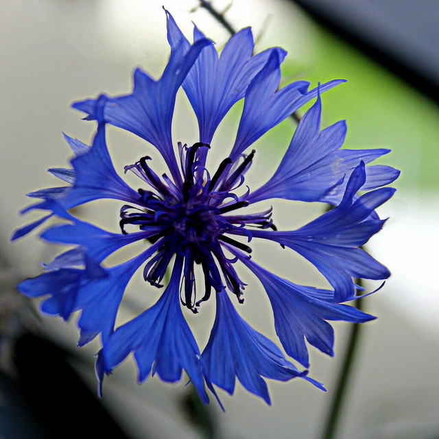 flower within flower within flower