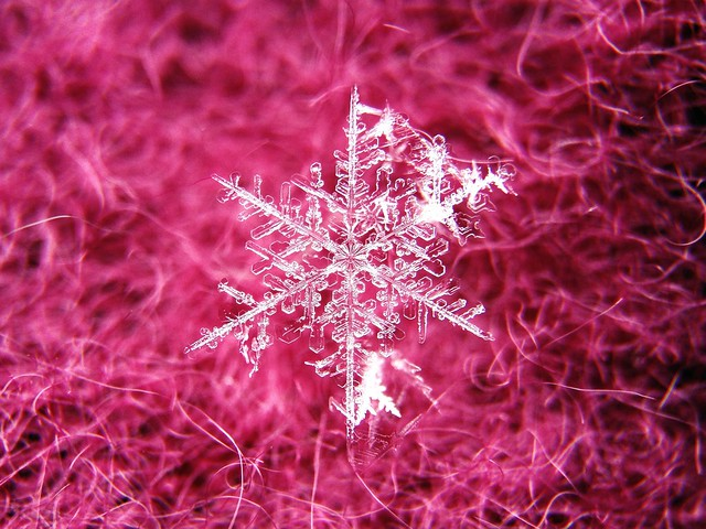 Snowflake Macro (iPhone 5 & Olloclip)