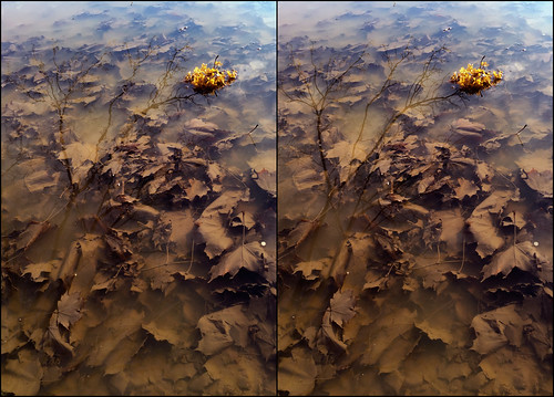 reflection tree water leaves 3d arc surface crossview