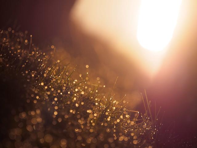 Grass Bubbles [Explored]