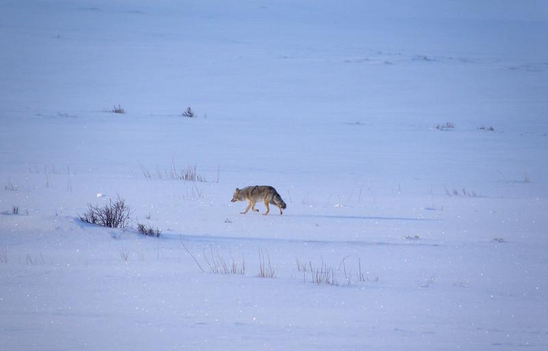 2014 11 17 - Coyote Ystone - P4110009