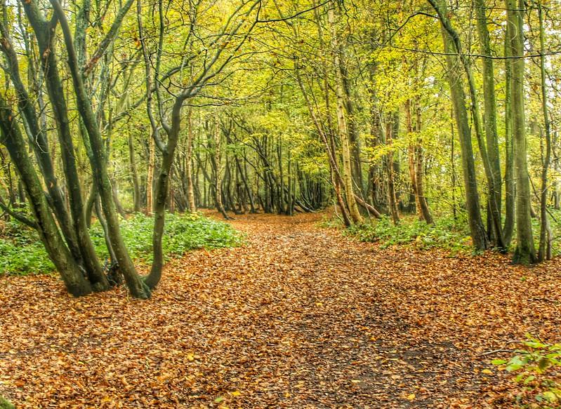 Tyrrel's Wood, Norfolk