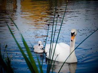 Hampton (Peterborough) in Spring