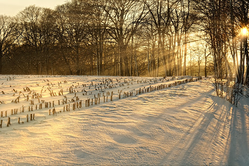 Sunny Snowday's End