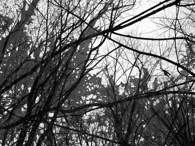 Malignant Woods