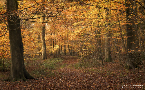 wood autumn trees england orange color colour nature woodland season unitedkingdom sony a77 checkendon sonyalpha andyhough slta77 andyhoughphotography