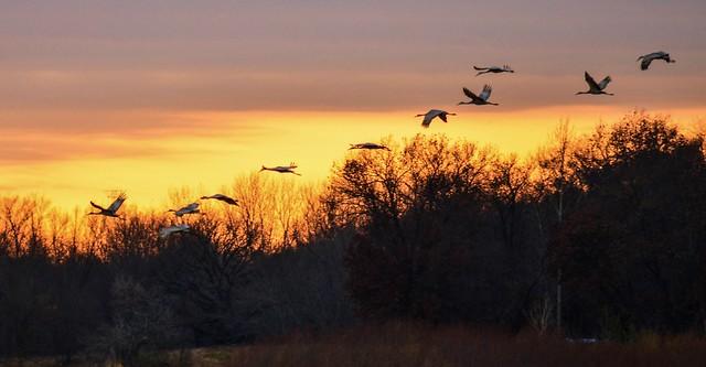Nygren Wetlands-Sand Hill Cranes 2
