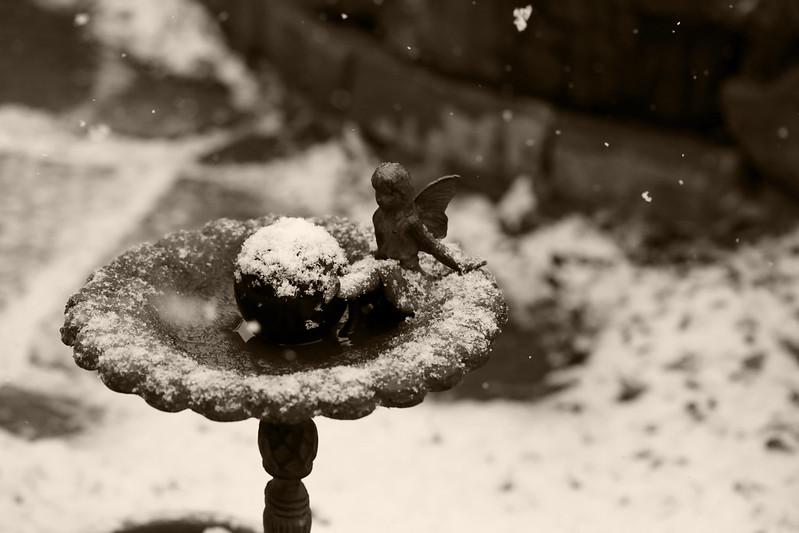 2014 12 14 - Snow faerie - Mocha Velvet BW - 9S3A4134