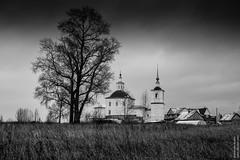Tree & church