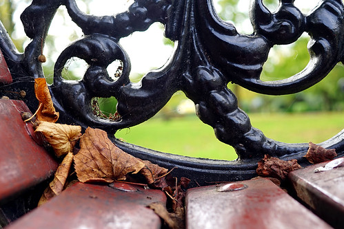 bench victoriapark autumnleaves cobweb portsmouth a7 happybenchmonday sal30m28