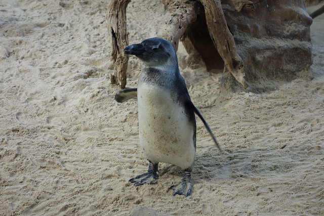 Southafrica-Capetown_Two_Oceans_Aquarium_28