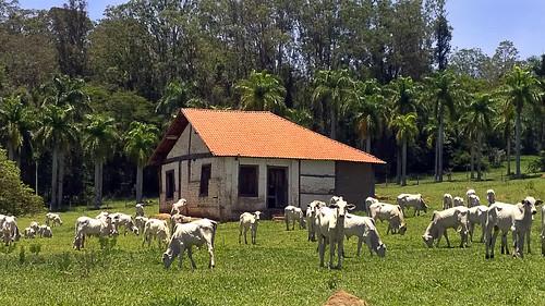 brasil brazil campinas joaquimegídio distrito américadosul rural southamérica pico cabras picodascabras trilha trail ontheroad estrada casebre ngc naestrada