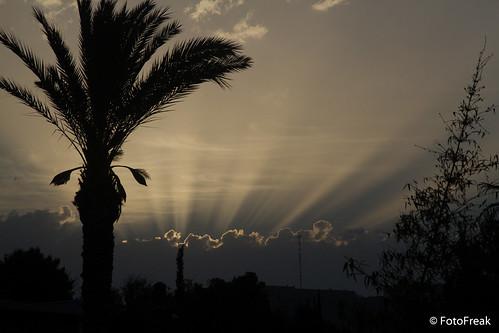 sun sunrise israel jerusalem natur palm event orte sonnenaufgang 2012 palmen blumenundpflanzen jahrzahlen israelurlaub