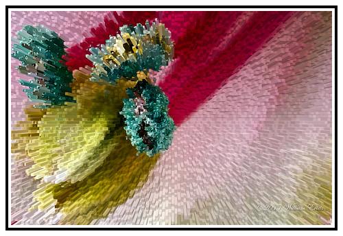 flowers colour detail macro nature closeup canon special effect astramaria