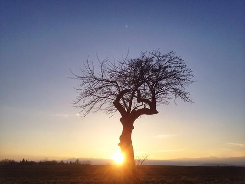 nature aeppelboom