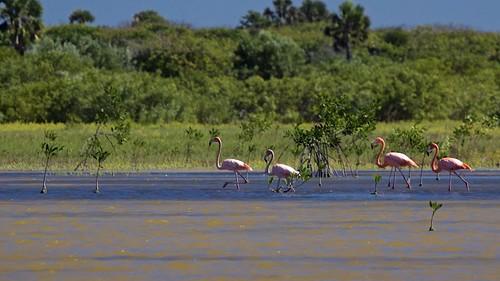 nature wildlife pedernales jaraguanationalpark lagunaoviedo