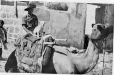 Horrie montado a lomos de un camello