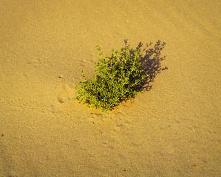 Green on Yellow | by Doha Sam