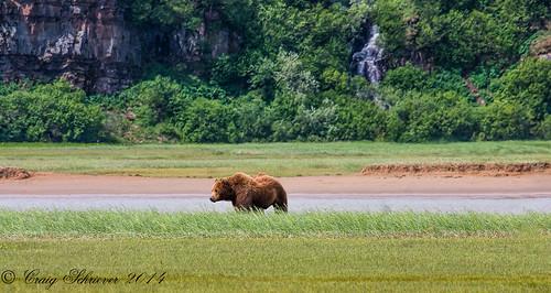 Katmai National Park   by Craig Schriever