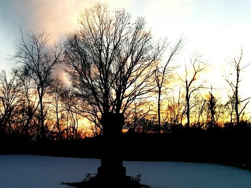 trees sunset skyline